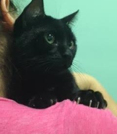 Leo (Hudson NH adoption center)