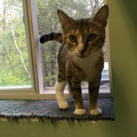 Gretchen (Hudson NH adoption center)
