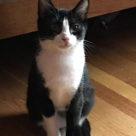 Rascal (Salem NH foster home)